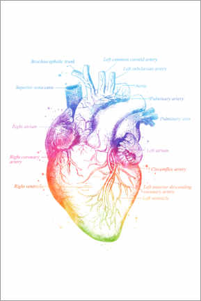 Premium poster  Anatomy of the Heart - Mod Pop Deco