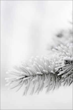 Acrylic print  Ice and snow in the winter forest - Studio Nahili