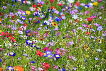 Foam board print  Colorful flower meadow - fotoping