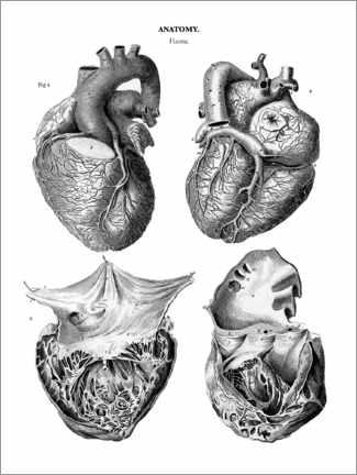 Wood print  Anatomy of the human heart - Thomas Milton