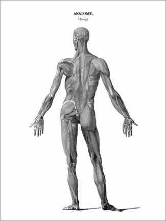 Canvas print  Anatomy of Human Musculature - Thomas Milton