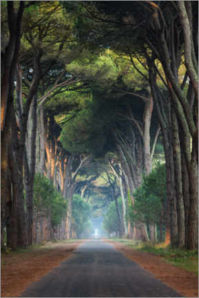 Canvas print  Tree Tunnel - Michael Breitung