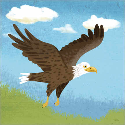 Premium poster White-tailed eagle