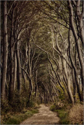 Gallery print  Path through the Poelwald - Claudia Moeckel