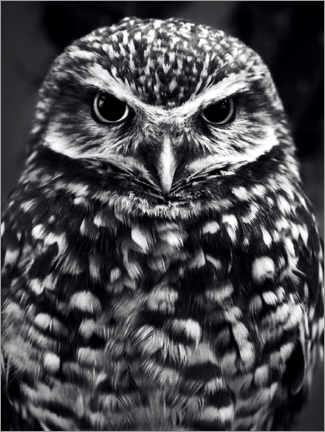 Premium poster Owl on the lookout