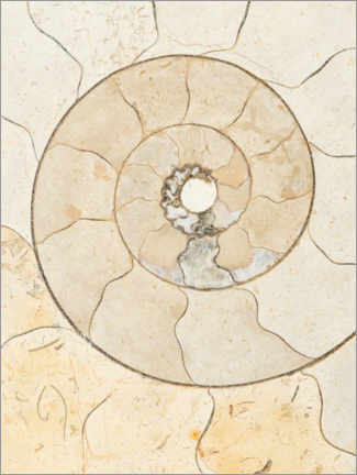 Foam board print  Ammonite fossil - Mark Windom