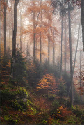 Acrylic print  In the cloud forest - André Wandrei