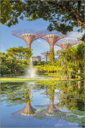 Premium poster  Supertrees at sunrise, Singapore - Markus Lange