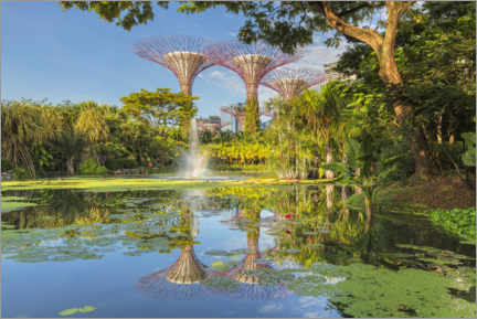 Premium poster  Supertrees in the morning, Singapore - Markus Lange