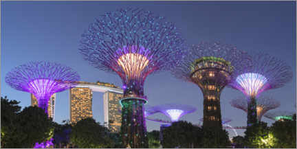 Premium poster  Supertrees by night, Singapore - Markus Lange