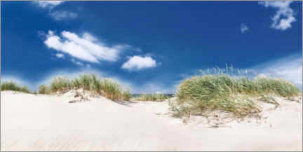 Acrylic print  Panorama dune landscape on the beach on the Baltic Sea - Mandfred Voss
