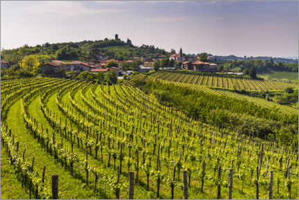 Canvas print  Vineyards at a Winery in the Rolling Hills - Matthew Williams-Ellis