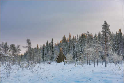 Canvas print  Camping in a Remote Forest Landscape - Matthew Williams-Ellis