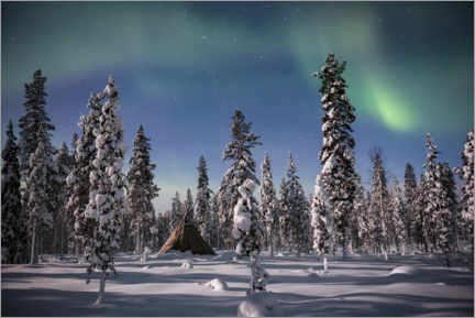 Foam board print  Northern Lights over a Snow Covered Forest - Matthew Williams-Ellis