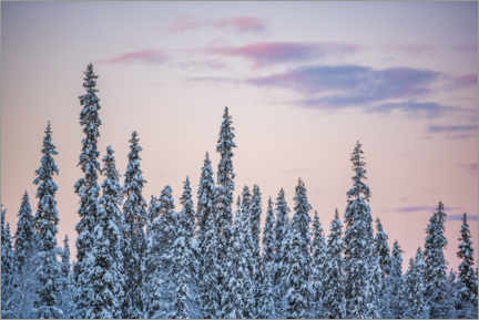 Aluminium print  Pink Sunset Over Winter Forest Landscape - Matthew Williams-Ellis