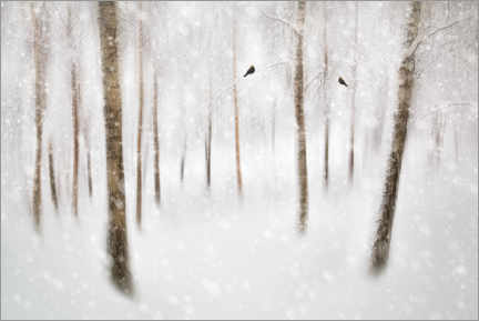 Foam board print  Winter birch trees - Gustav Davidsson