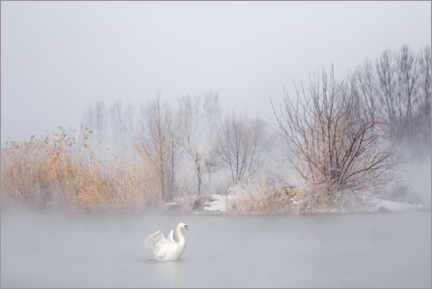Wall sticker  Swan in the fog - UU