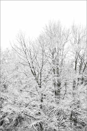 Acrylic print  Snow splendor - when green trees turn white in winter - Studio Nahili