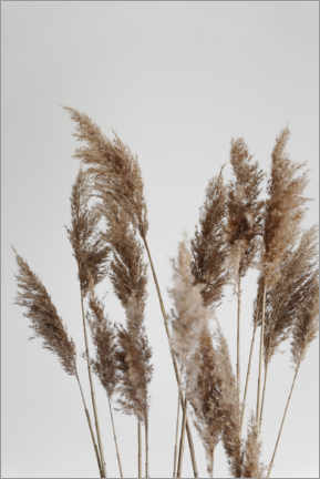 Premium poster Perfect pampas grasses in the wind