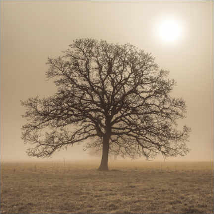 Aluminium print  Tree in the fog - Assaf Frank