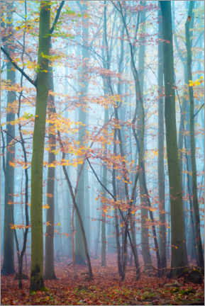 Premium poster Forest in the Harz Mountains in the fog