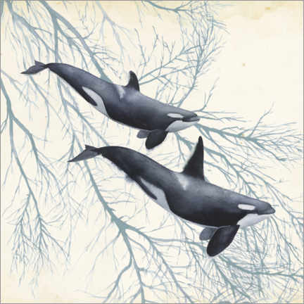 Premium poster Orcas in the underwater forest