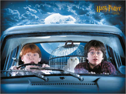 Premium poster  Harry, Ron and Hedwig - The Chamber of Secrets