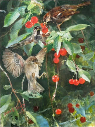Canvas print  Sparrows in a cherry tree - Bruno Andreas Liljefors