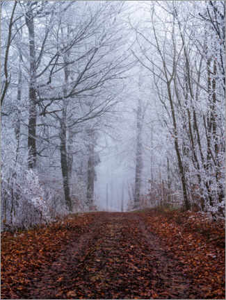 Premium poster Frozen autumn forest with white trees coverd in ice, Switzerland