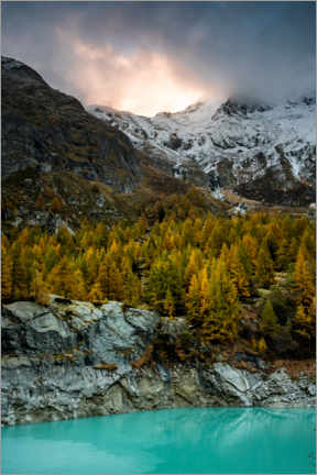 Premium poster  Larch forest in evening mood - Marcel Gross