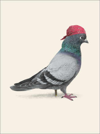 Premium poster  Pirate Pigeon - Terry Fan