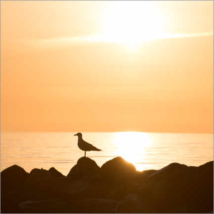 Wood print  Seagull on the sea and beach in sunrise - Mandfred Voss
