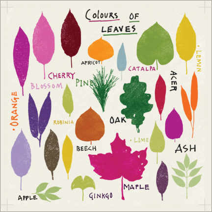 Gallery print  Colors of leaves - Jenny Frean