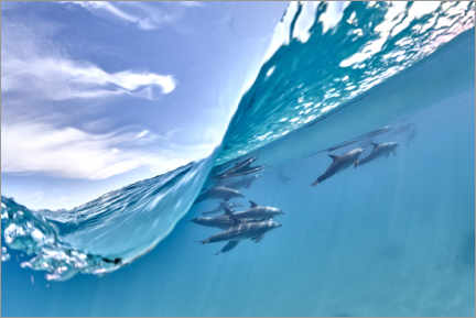 Premium poster Dolphins group and blue wave