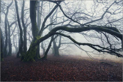 Canvas print  Mystical tree skeleton in the fog in late autumn - The Wandering Soul