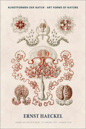 Foam board print  Ernst Haeckel - Art forms of nature I - Museum Art Edition