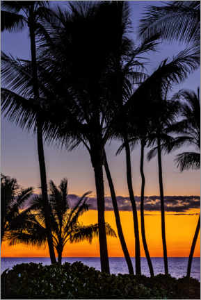Premium poster  Tropical sunset - Jim Engelbrecht