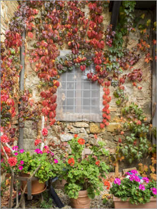 Wood print  Geraniums and autumn-colored climbing vines - Julie Eggers