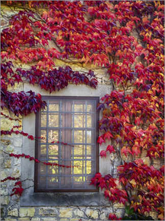 Aluminium print  Red ivy on the window - Julie Eggers