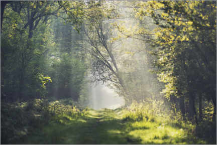 Gallery print  Fantastic forest path in the morning light - The Wandering Soul