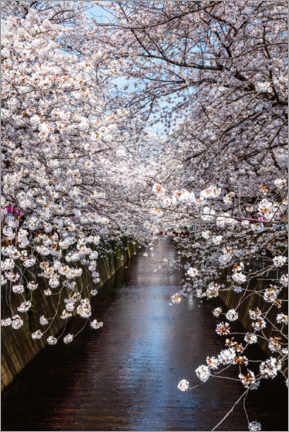 Premium poster Cherry blossoms in Tokyo