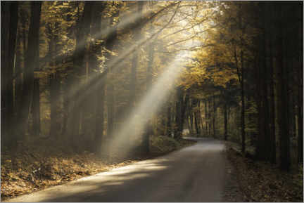 Gallery print  Rays of light in the autumn forest - Christian Möhrle
