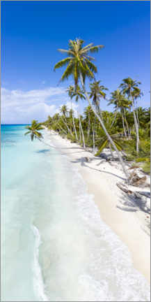 Premium poster Palm beach in the South Pacific