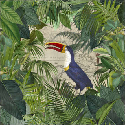 Aluminium print  The Toucans Kingdom - Andrea Haase