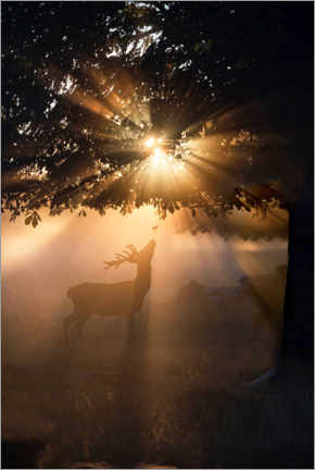 Premium poster Young deer in the evening light
