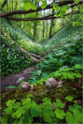 Gallery print  Snails in a forest full of wild garlic - Martin Podt