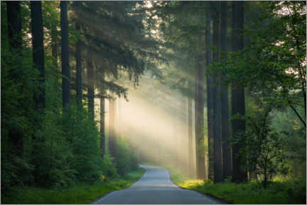 Acrylic print  The road in the forest - Martin Podt