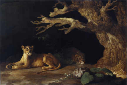 Acrylic print  Lioness and cave - George Stubbs