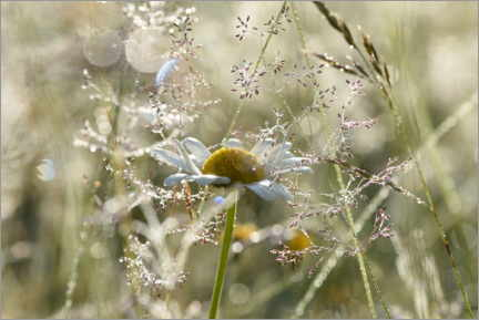 Aluminium print  Early morning in the meadow - GUGIGEI