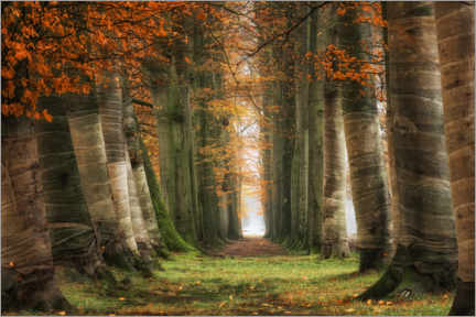 Wall sticker  Covered trees - Martin Podt